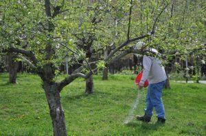 правила подкормки яблонь