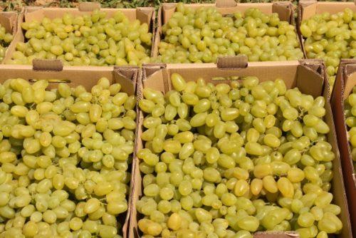 особенности винограда долгожданный