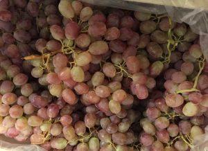 болезни винограда тайфи