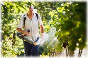правила обработки винограда купоросом