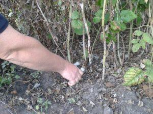 осенние работы с почвой