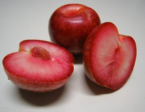 гибрид абрикоса и сливы