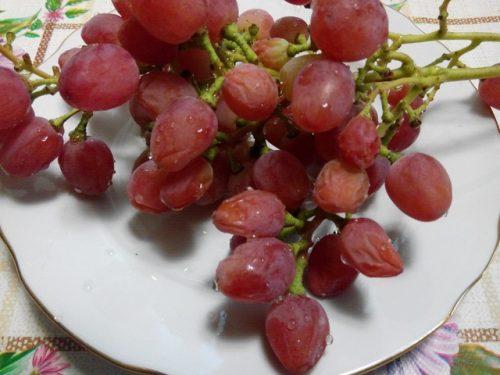 меры борьбы с параличом винограда