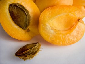 характеристика абрикоса шалах