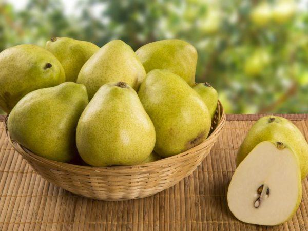 Скороплодный сорт груши Есенинская