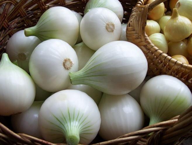 Белый лук- разновидности сортов, польза и вред, как правильно хранить